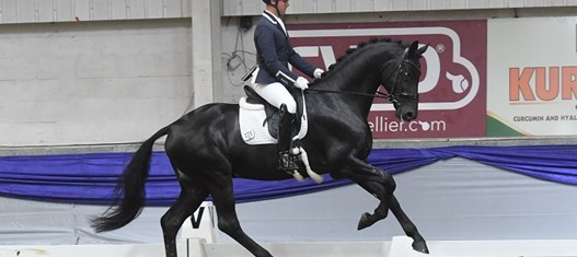 BD abroad: FEI World Breeding Championships
